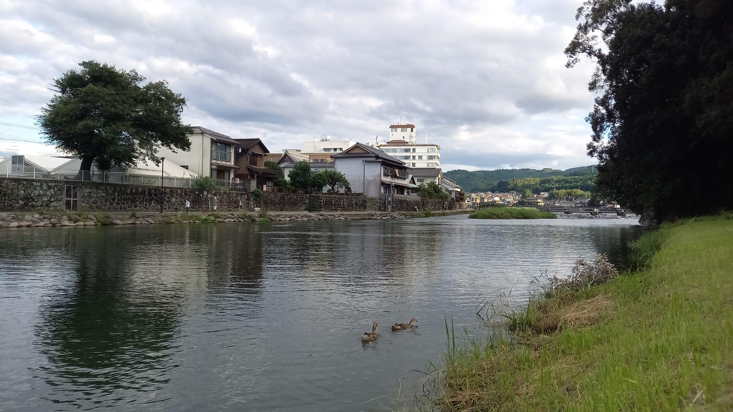 三隈川と鴨の親子